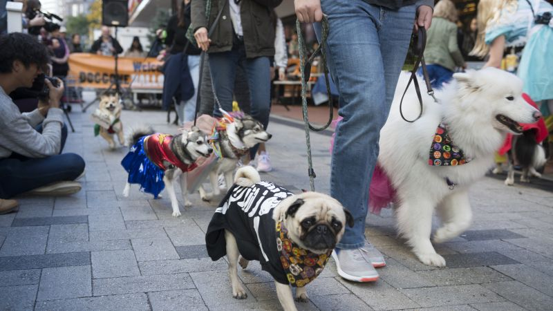 5th Annual Doggone Halloween Costume Parade