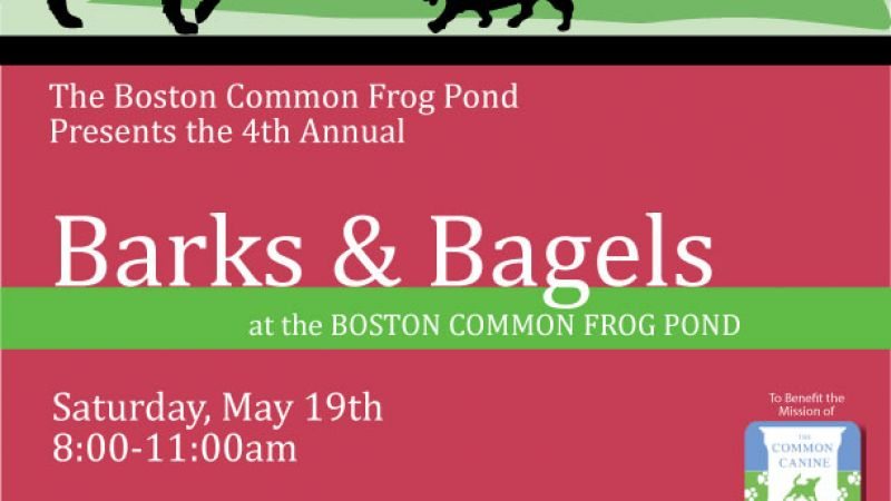 Barks & Bagels at The Boston Common Frog Pond